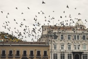 Are Pigeons  Dangerous for Satellite Broadband? Cybersecurity expert, Prof. Alan Woodward, explains